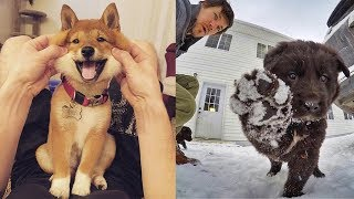 Cute And Funny Dog Videos Compilation 2019 – Funny Dogs And Owner | TRY NOT TO LAUGH