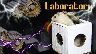 Hamster Discover The Laboratory Making From Cardboard