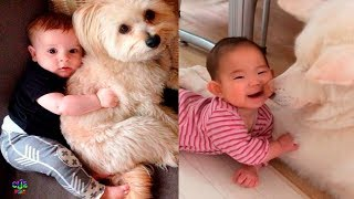 Cute Babies Dogs / Cute and  Dog Videos Compilation