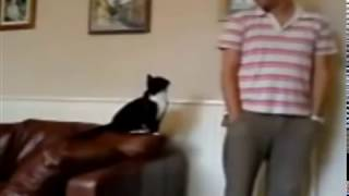 Cats Seeks Attention | Cute Cats Wants Petting Video Compilation