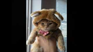Kittens Wearing Funny Hats (Cute cat pictures with funny song)