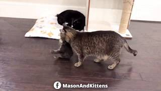 Grandpa Mason stockpiling kittens in his yurt – TinyKittens.com