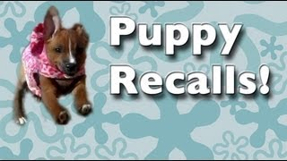 Teach ANY puppy to come when called! – come recall training, come recall fun and games!