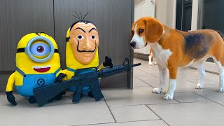 Minions Vs Dogs   🍌Banana Heist🍌   Funny Dogs Louie and Marie