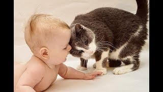 Funny and Cute Babies and Cats moments –  Baby and Cat fun and Fails Compilation