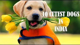 10 Cutest dogs in India