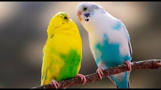 Funny Birds Cute Parrots Doing Funny Moments