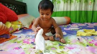 Cute Birds Doing FUNNY Stuff ! Cute birds funny Videos and Vines Compilation #01