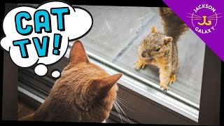 Cute Cat Compilation of the Week…CAT TV!