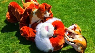 Cute Puppy Vs Real Life Stuffed Animal : Funny Dogs Louie & Puppy Marie
