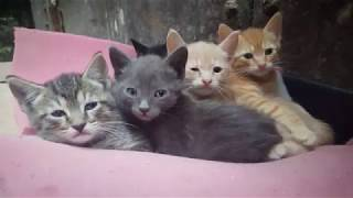 cute kittens and cats in morocco 4K