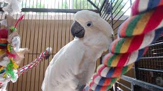 Omg Joseph & Tiago parrots are cute birds :)