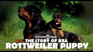 Rottweiler Puppy Bea – Video Diary