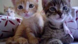 Xtremely CUTE – Beautiful kittens