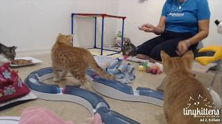 Tiny Kittens Suzanne & aussies then Matilda & Bongo go home about an hour into 7 2 2017