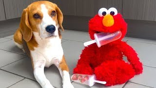 ELMO MAKES STRAWBERRY ICE CREAM : Funny Dogs Louie and Marie