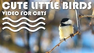 ENTERTAINMENT VIDEO FOR CATS. Cute little birds for cats to watch.