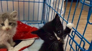 Kittens Rescued From The Floods & Church Mice Kittens Get Names – Cute Baby Kittens