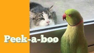 Cute and funny Birds compilation