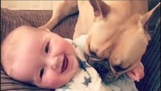 Baby and Dog are Best Friends –  Funny Dogs and Babies Playing Together –  Youtube