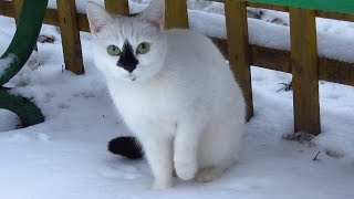 Funny cats. Five cute cats. Cats meowing on snow