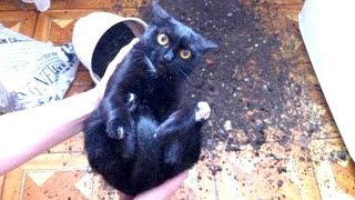 WARNING: You may DISLOCATE YOUR JAW FROM LAUGHING – Best FUNNY CAT videos