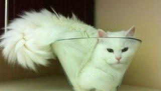 IMPOSSIBLE NOT TO LAUGH – Funny cat compilation