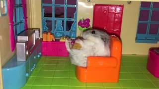 How these cute #hamsters enjoy their playtime (2019 Top funny #hamster #mukbang video)