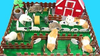 Let's Join Shaun The Sheep Maze With Three Cute Hamsters