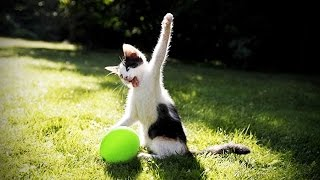 CATS vs BALLOONS 😂 (HD) [Funny Pets]