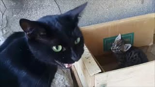 Mom cat talking to her kittens