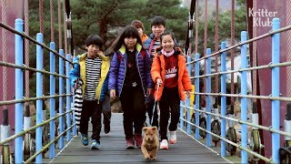 School Is Not Just For Kids, But Also For Cute Dogs! | Kritter Klub