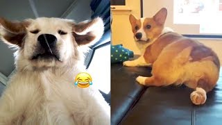 Funny Dog Videos Vines – TRY NOT TO LAUGH Funny Dogs | Tik Tok China