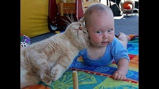 Adorable Babies and Cats moment –  Baby and cat fun and fails Compilation