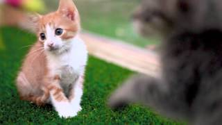 Monday Morning Kitten Therapy: Kittens Get Hypnotized by a Feather