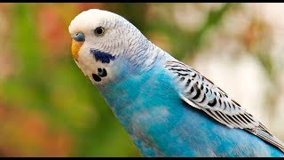 Brilliant Birds || Funny Bird Video Compilation