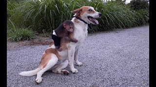 Baby Monkey And Funny Dog – Funny Animals