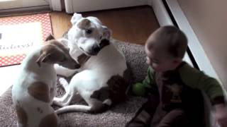 Funny cute dogs and kids
