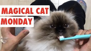 Magical Monday Cats | Funny Cat Video Compilation 2017