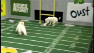 Puppy Bowl Classic: Puppy Play