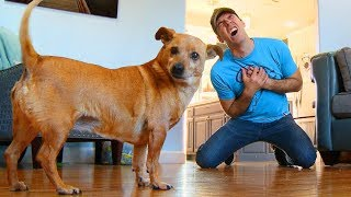 Faking My Death In Front of My Dog – Funny Dog Reacts