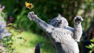 Only funny animals can make you laugh so hard you cry – Funny animal compilation