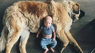 Dogs And Babies Best Friends – Funny Dogs And Babies Playing Together – Puppies TV