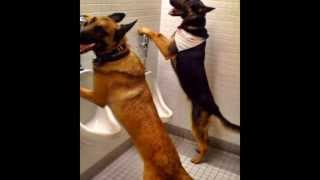 Cute Dogs pee in unirals -epic video