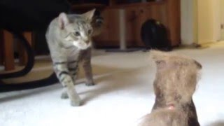 FUNNY CATS VS. TOY HORSE: Cute Cats Kwazi & Uli