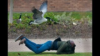 FUNNIEST Geese Attack Compilation – MUST SEE Angry goose video [NEW HD]