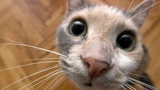 Pets with unusual sounds – Funny cat & dog video