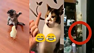 Best Cats Funny Videos | Cats Funny Compilation | Most Funny Cat Videos New