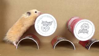 Best of Hamster Mazes and Obstacle Courses