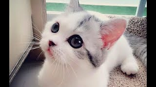 WOW – Cats and Kittens Galore. Enjoy Funny Cute Cats and Kittens Meowing Playing Videos #45